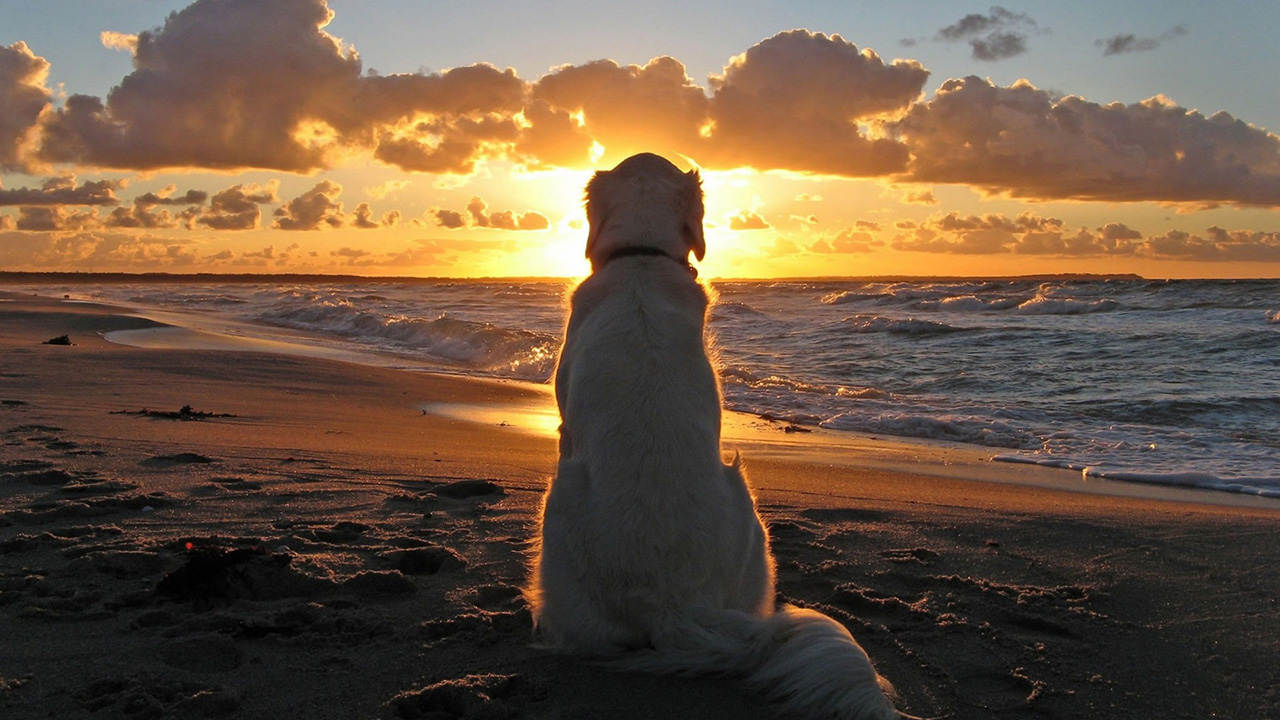 Dog-In-Beach-Watch-Sunset-Wallpaper-HD-Dekstop